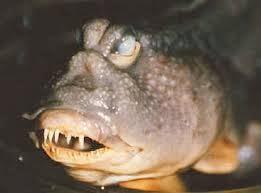 ugly fish 2